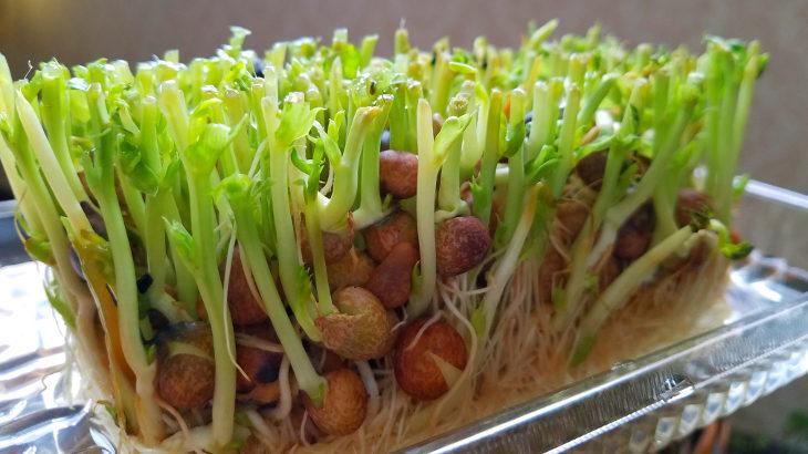 自家栽培がうまい!食材を育てて楽しくキャンプご飯